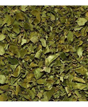 Moringa Oleifera a granel